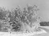 Snow Covering Countryside Northeast of Lake Ladoga Premium Photographic Print by Carl Mydans