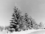 Snow Covering Countryside Near Lake Ladoga Photographic Print by Carl Mydans