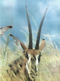 Overleaf of Cover of Life Magazine Dated 12-05-1969 with Pic of Roan Antelope Premium Photographic Print by John Dominis