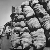 Boy Driving Truck Carrying Load of Potatoes Photographic Print by George Strock