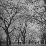 People Walking Through Cherry Orchard Photographic Print by Ian Smith