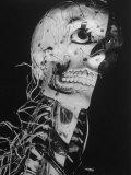 Startling Papier-Mache Model of Human Skull Exhibited by Clay-Adams Co Fotografiskt tryck på högkvalitetspapper av Margaret Bourke-White