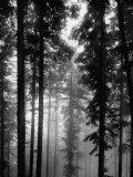 Bäume im Schwarzwald Fotodruck von Dmitri Kessel