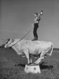 Boy Standing on Shorthorn Bull at White Horse Ranch Lámina fotográfica de primera calidad por William C. Shrout