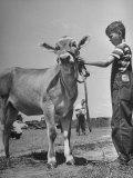 Farm Boy Holding His Young Heifer Premium Photographic Print by Bob Landry