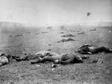 Bodies of Soldiers Strewn About Field Following Bloody Battle of Gettysburg During the Civil War Premium Photographic Print by Timothy O'Sullivan