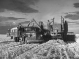 Combines and Crews Harvesting Wheat, Loading into Trucks to Transport to Storage Fotografie-Druck von Joe Scherschel