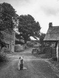 Collie Sheepdog Sitting in Road Leading Up Toward Castle Farm Owned by Beatrix Potter Fotografisk tryk af George Rodger