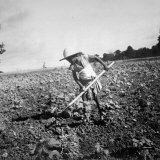 Child of Black Tenant Farmer Family Using Hoe While Working in Cotton Field Photographic Print by Dorothea Lange