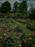 J. Horace McFarland's Garden, Pennsylvania Premium Photographic Print by Andreas Feininger
