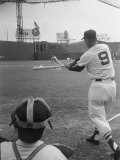 Ted Williams Batting at Fenway Park Premium Photographic Print by Ralph Morse