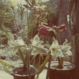 Flower Pots, Okinawa Photographic Print by J. R. Eyerman