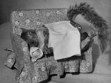 Tommy Tucker the Squirrel Sleeping on a Tiny Couch Photographic Print by Nina Leen