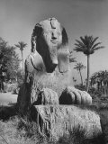 Sphinx Made of Alabaster Sitting on Site of Ancient City of Memphis Premium Photographic Print by Eliot Elisofon