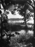 Lush Vegetation Growing Everywhere around Water Premium Photographic Print by John Florea