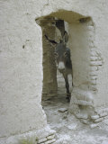 Donkey Peering Through Open Passage Way in White-Washed Wall in Ruined City Premium Photographic Print by Howard Sochurek