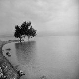 Eucalyptus Trees Growing at the Edge of the Sea of Galilee Photographic Print by John Phillips