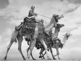 Arab Legionnaries Riding their Camels Photographic Print by John Phillips