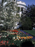 Flowers Blooming in the The White House Gardens Premium Photographic Print by George Silk