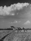 Mare and Colt Running across Open Field, with Billowy Clouds in Sky Premium Photographic Print by Nat Farbman
