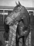 Championship Horse Seabiscuit Standing in Stall after Winning Santa Anita Handicap Photographic Print by Peter Stackpole