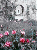 Roses in Fore in Duke of Windsor's Garden at His Summer Home in South of France Premium Photographic Print by Frank Scherschel