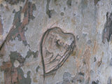 Heart Carved into a Tree Trunk Premium Photographic Print by Vernon Merritt III