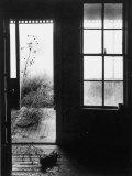 Tumbleweed Blowing into the Door of a Prairie Home Livingroom Premium Photographic Print by Howard Sochurek