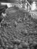 Men Sorting Cantaloupes before Packing into Crates Premium Photographic Print by Loomis Dean