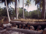 Group of American Soldiers Peering from a Reinforced Bunker on Tarawa During WWII Premium Photographic Print by J. R. Eyerman