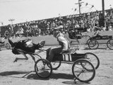Racers During the Ostrich Racing, Grange County Fair Premium Photographic Print by Loomis Dean