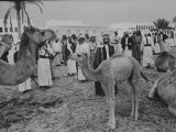 Ruler of Oil-Rich Kingdom, Shakbut Bin Sultan, Inspecting Camel Herd Outside Palace Premium Photographic Print by Ralph Crane