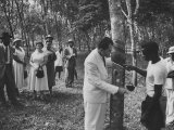 US Vice-President Richard M. Nixon Inspeacting the Firestone Rubber Plantation Lámina fotográfica de primera calidad