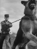 German Shepherd Trained to Protect Bombers at Sac Loring Air Force Base Premium Photographic Print