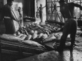 Tuna Being Unloaded from Boats at Van Camp Tuna Co. Cannery in American Samoa Photographic Print by Carl Mydans