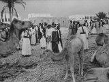 Camels Inspected by Sheik Shakhbut, Ruler of Oil-Rich Kingdom, with Other Arabs Premium Photographic Print by Ralph Crane