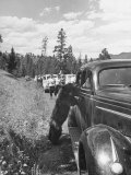 Bear Approaching Tourists in Car at Yellowstone National Park Premium Photographic Print by Alfred Eisenstaedt