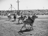 People Riding Zebras During the Ostrich Racing, Grange County Fair Premium Photographic Print by Loomis Dean