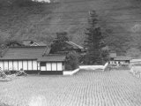 Rice Farm Between Hiroshima and Fukuyama Premium Photographic Print by J. R. Eyerman
