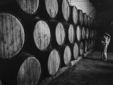 Winery Worker Checking Barrels of Wine Premium Photographic Print