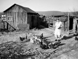 Farm Woman Feeding Her Chickens in a Small Coal Mining Town Premium Photographic Print by Alfred Eisenstaedt