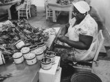 Crab Picker with Lumps and Freeze Dried Crab Meat in Cans Premium Photographic Print by Ed Clark