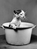 Kitten Emerging from Pot of Milk after Falling into It Photographie par Nina Leen