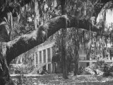 Trees Covered with Spanish Moss Standing in Front of Large Plantation House Photographic Print