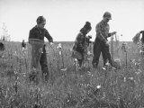 Children Picking Milkweeds Growing in a Field Premium Photographic Print