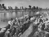 In Heavy-Wheeled Carts, Refugees Making their Way to India Premium Photographic Print by Margaret Bourke-White