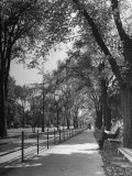 People Enjoying Sunny Day at Park on Ocean Parkway Premium Photographic Print by Ed Clark
