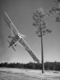 Pilot Sammy Mason Flying around a Tree During a Performance of His California Air Circus Photographic Print by Loomis Dean