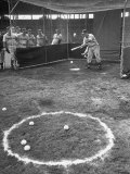 Outfielder Practicing His Bunting Premium Photographic Print by Ralph Morse