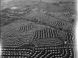 Aerial View of Suburban Housing Development Outside of Philadelphia Premium Photographic Print by Margaret Bourke-White